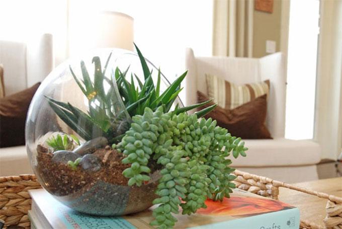 biljka-u-sobi
