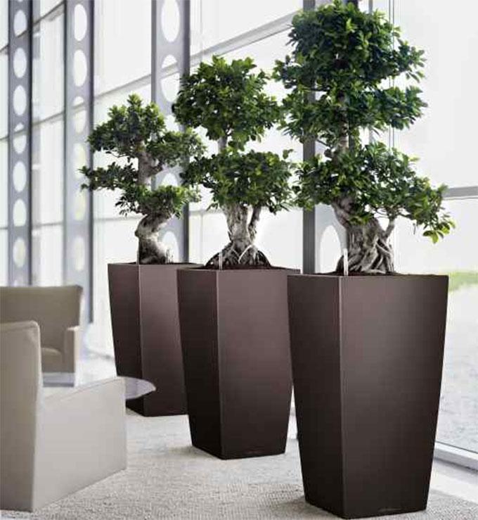 biljke-poslovni-prostor