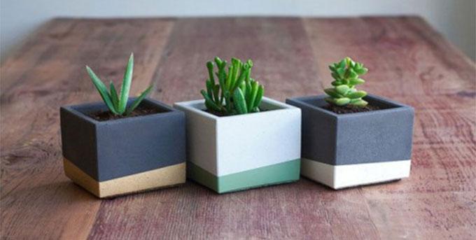 mini-biljke-za-sto